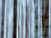Winterwald 2/25