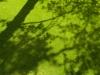 rasenflaeche-mit-schattenbaum