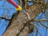 Winterschnitt am Baum